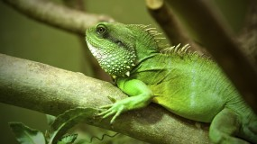 Lizard - Blackpool Zoo - Oct 2013
