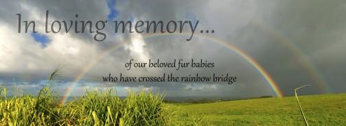 Our Memory Garden